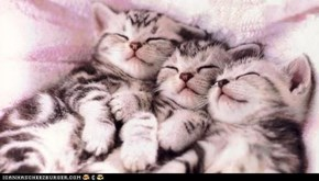 Cyoot Kittehs of teh Day: Three in a Row