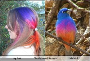 my hair Totally Looks Like this bird