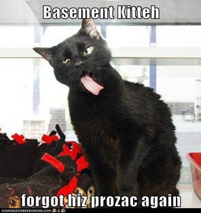 Basement Kitteh  forgot hiz prozac again