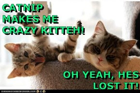 CATNIP                       MAKES ME                     CRAZY KITTEH!              OH YEAH, HES LOST IT!