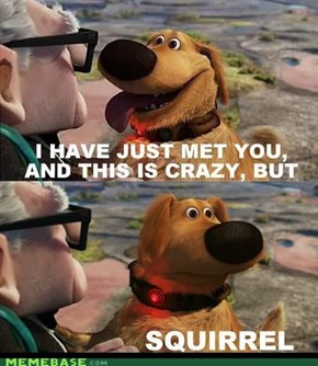 So Call Me.... SQUIRREL!!!!