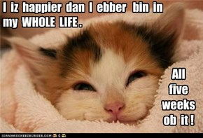I  iz  happier  dan  I  ebber   bin  in  my  WHOLE  LIFE .