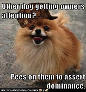 Other dog getting owners attention?  Pees on them to assert dominance.