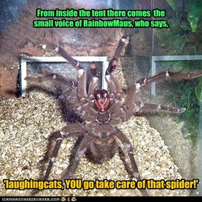 Spiders are not welcome here!