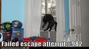 Failed escape attempt #982