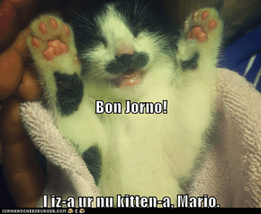 Bon Jorno!  I iz-a ur nu kitten-a, Mario.