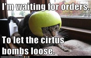I'm waiting for orders.  To let the cirtus bombs loose.