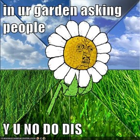 in ur garden asking people  Y U NO DO DIS