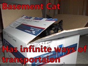 Basement Cat  Has infinite ways of transportaion
