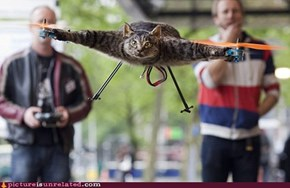 This Cat is Now a Helicopter