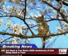 Breaking News - Cat Stuck in Tree Marks 500th Anniversary of Cats Being Stuck in Trees