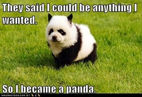 They said I could be anything I wanted.  So I became a panda.