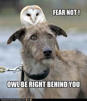FEAR NOT !