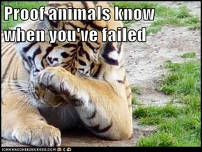 Proof animals know when you've failed