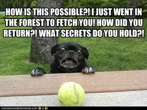 Paranoid Pug and the human didn't throw it