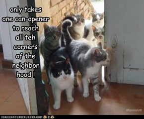 only takes one can-opener to reach all teh corners of the neighbor hood !