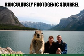 Photogenic Squirrel