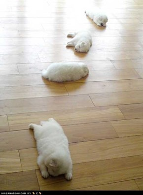 Cyoot Puppy ob teh Day: Trail of Cyoot