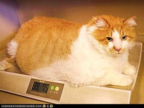 Around the Interwebs: Meet Garfield, the World's Biggest House Cat