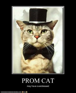 PROM CAT