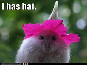 I has hat.