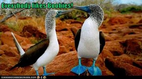 Everybody likes Boobies!