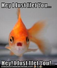 Hey I Just Met You...  Hey! I Just Met You!...