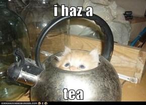 i haz a  tea