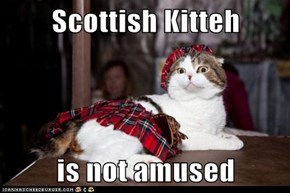 Scottish Kitteh  is not amused