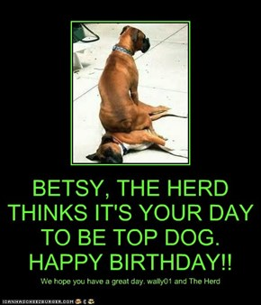 BETSY, THE HERD THINKS IT'S YOUR DAY TO BE TOP DOG. HAPPY BIRTHDAY!!