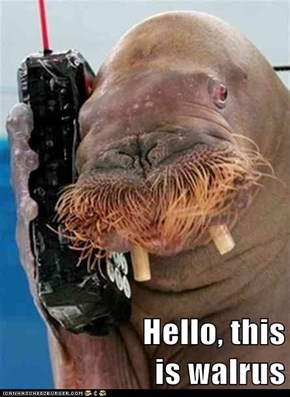 Hello, this                      is walrus