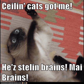 Ceilin' cats got me!  He'z stelin brains! Mai Brains!