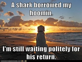 A shark borrowed my hoomin.  I'm still waiting politely for his return.
