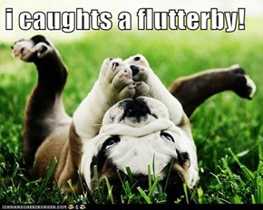 i caughts a flutterby!