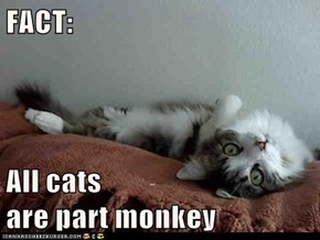 FACT:  All cats                                                  are part monkey
