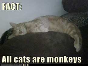 FACT:  All cats are monkeys