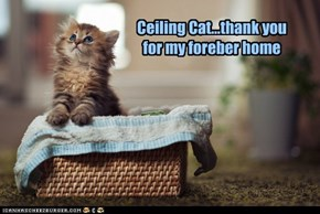 Ceiling Cat...thank you for my foreber home