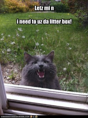 Letz mi n  i need to uz da litter box!