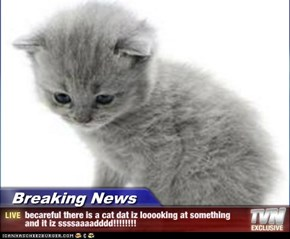 Breaking News - becareful there is a cat dat iz looooking at something and it iz ssssaaaadddd!!!!!!!!