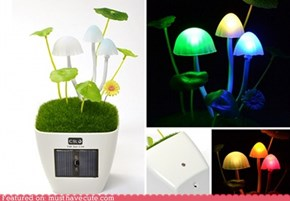 Kinoko Mushroom USB Lamp