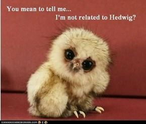 Memebase: Skeptical Owlet