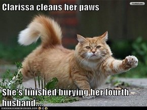 Clarissa cleans her paws  She's finished burying her fourth husband....