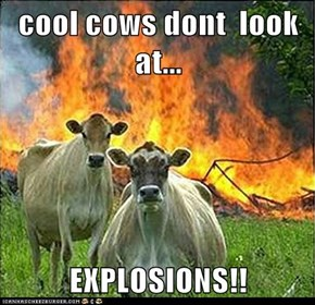 cool cows dont  look at...  EXPLOSIONS!!
