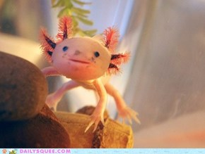 Creepicute:  Axolotl
