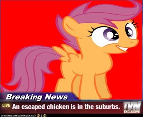 Breaking News - An escaped chicken is in the suburbs.