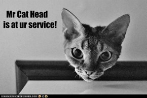 Mr Cat Head is at ur service!