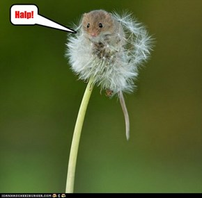 What DID the Dormouse say?