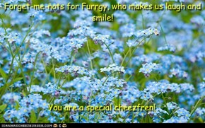 Forget-me-nots for Furrgy, who makes me laugh and smile