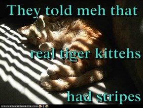 They told meh that real tiger kittehs  had stripes
