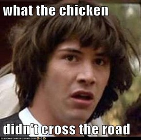 what the chicken  didn't cross the road